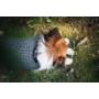 Kép 3/3 - NRDOGS Kutyaruha szürke- L (37-45cm háthossz)