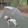 Kép 2/8 - Kutya esernyő pórázzal